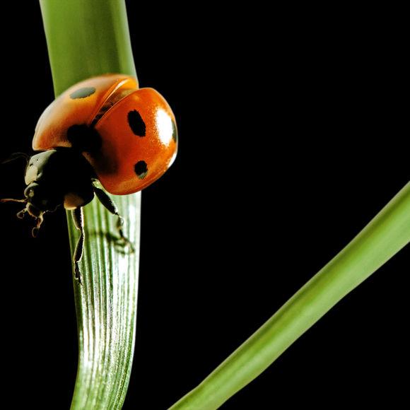0215 gardening ladybug brmmgu
