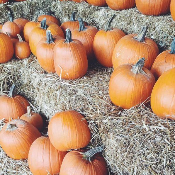 Pumpkins uzhq3d