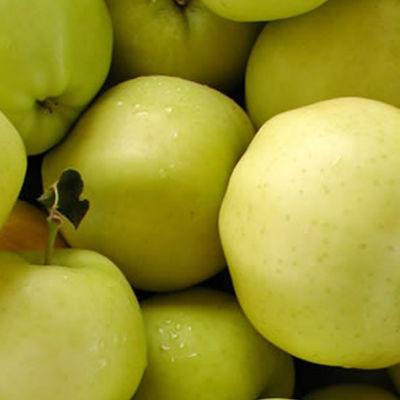 Gingergoldpdxnursery apples so1sbo