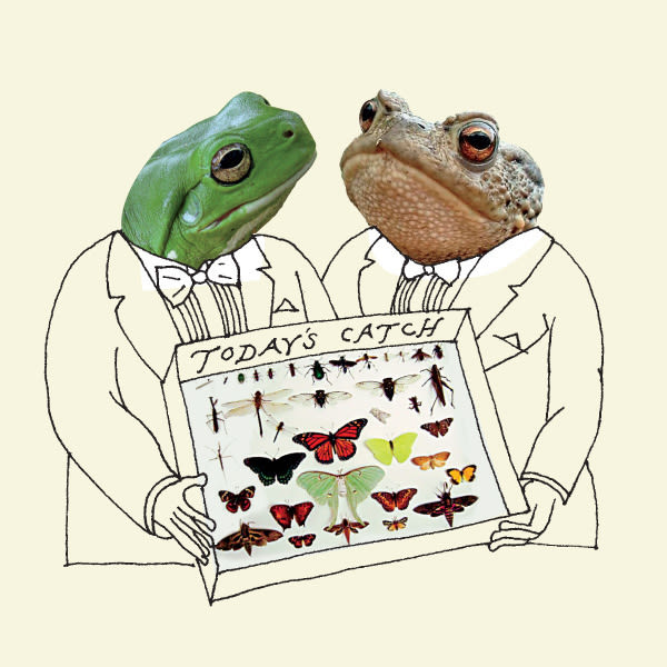 Frog toad illo lbz4or