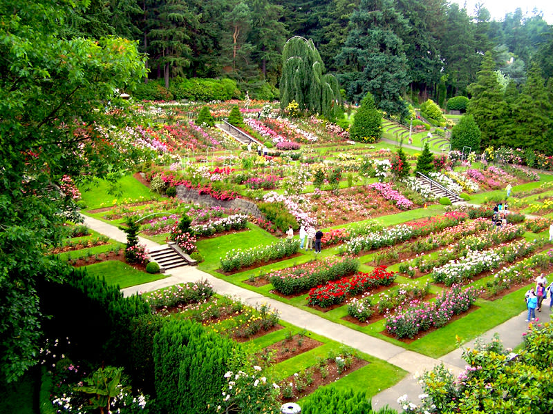 Happy 100th Birthday International Rose Test Garden