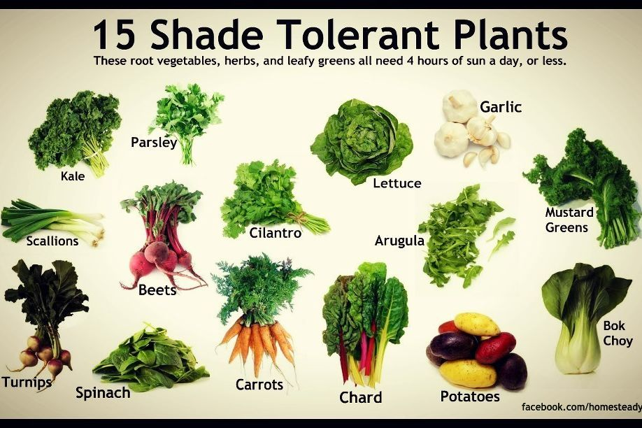 Shade Tolerant Vegetables Portland Monthly