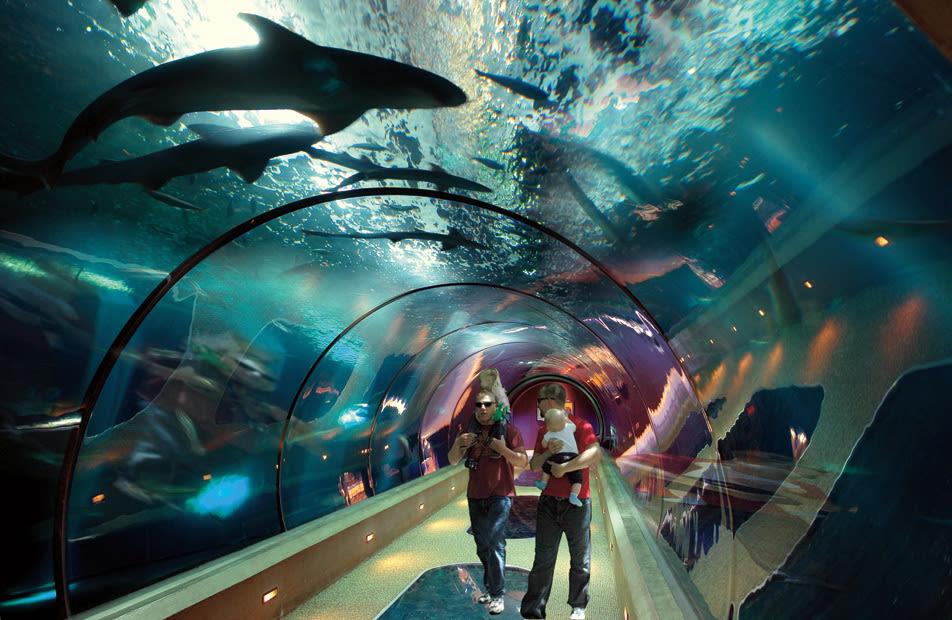 Passage at oregon coast aquarium ogb7pr