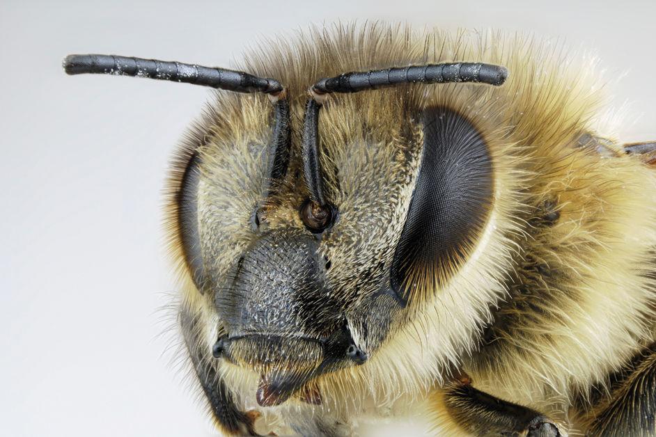 Bee lzxj5j