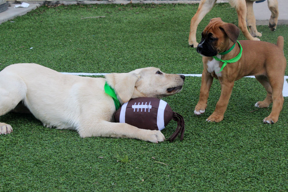 Puppy bowl 8500 mgxzqf