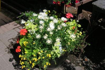 Cornell farm planter wzzrsg
