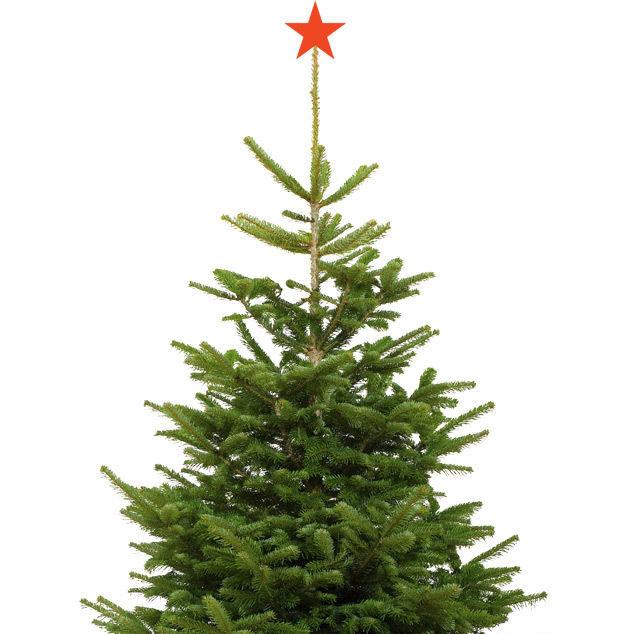Christmas tree dbzcdh