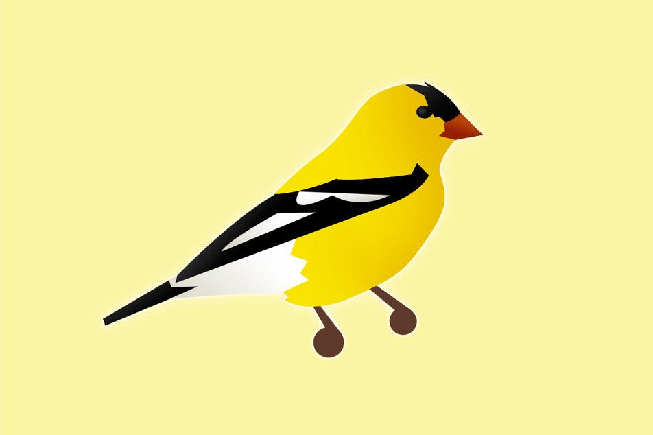 Goldfinch illustration hx1dsq