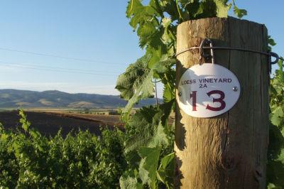 0709 pg168 bridges loess vineyard duhlfs