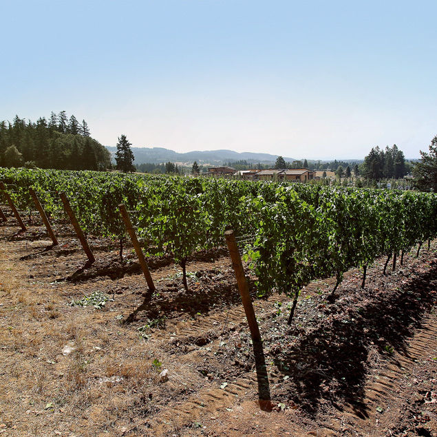 09 34 bridges vineyard  qb0q78