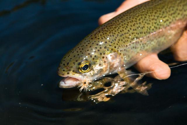 0711 pg178 warrior trout zhvjot