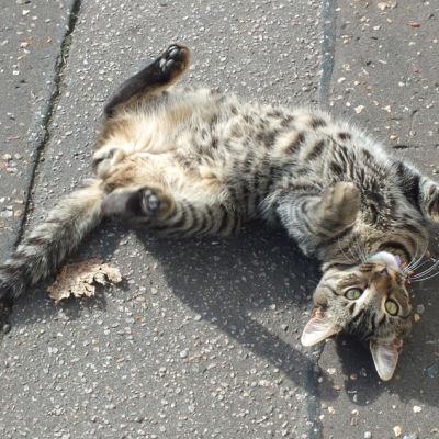 Cat uqrt7q