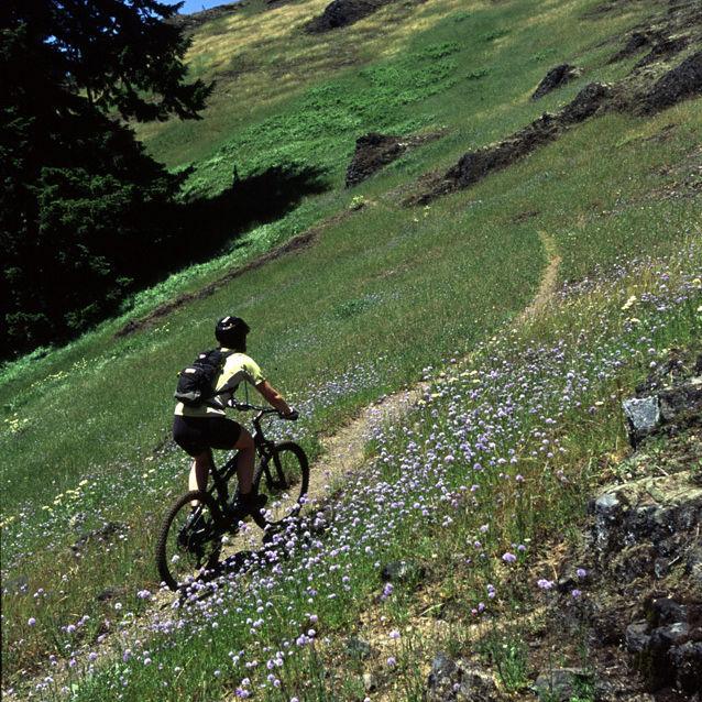 Oakridge alpine trail tcnyfn