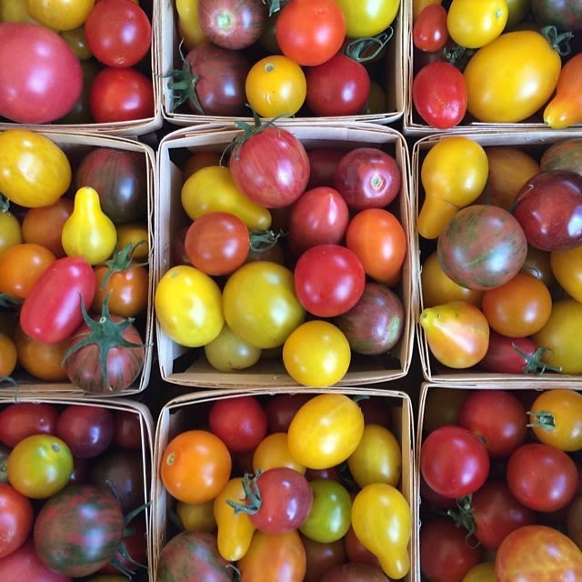 Tomatoes hnitxx
