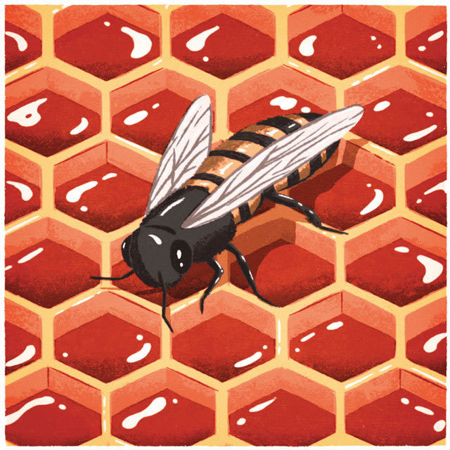 Beehive illustration ooccfl