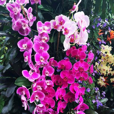 Orchids nonaf0