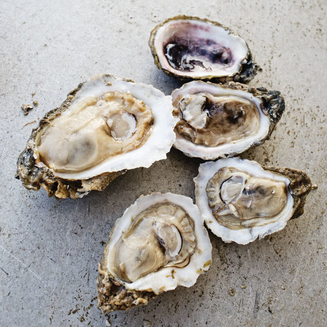 0114 on the table oysters ladies pass oysters n5zp15