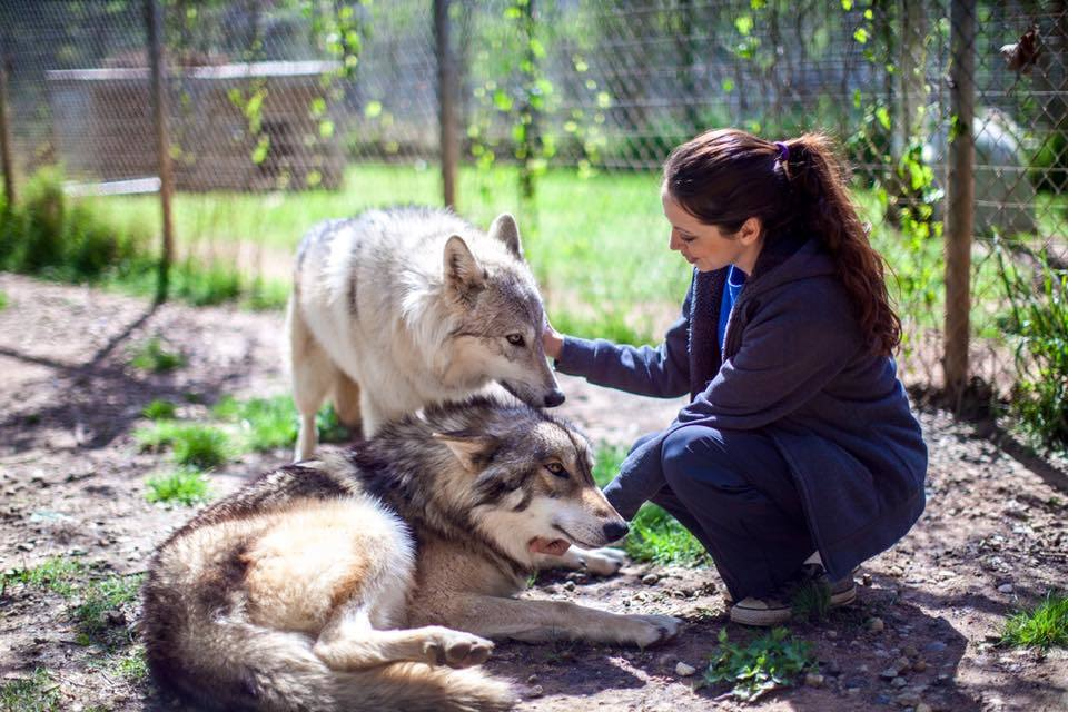 Saint francis wolves lmpk7f