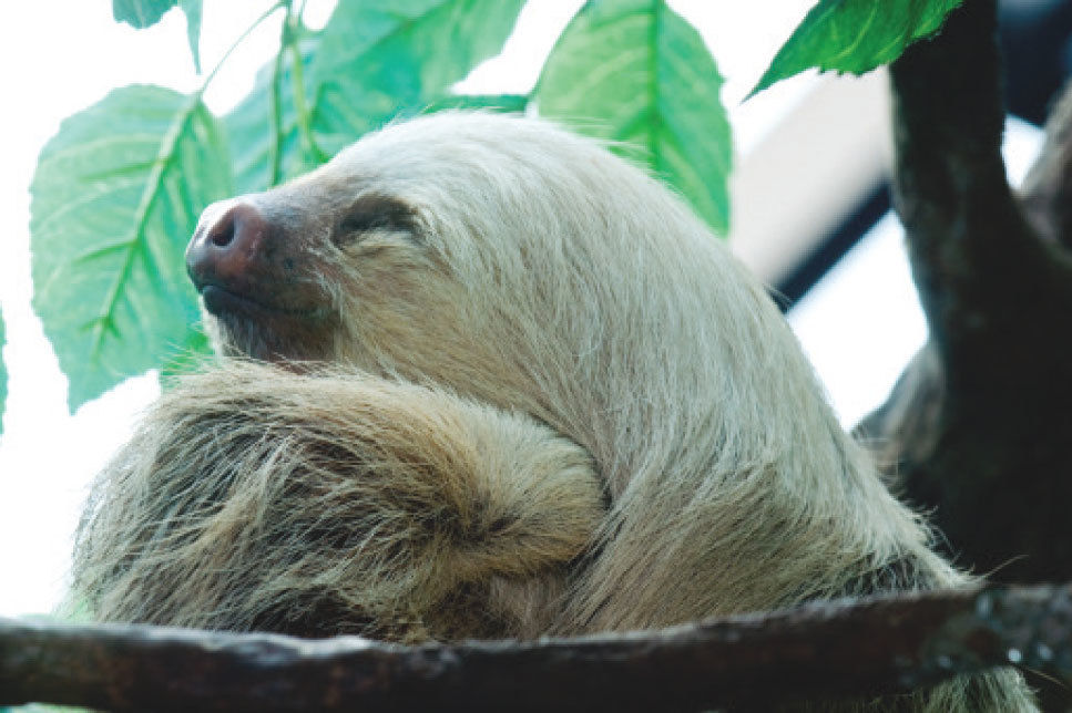 Sloth psuqhr