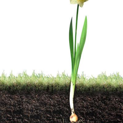 1008 143 dig soil bulb lr2ia5