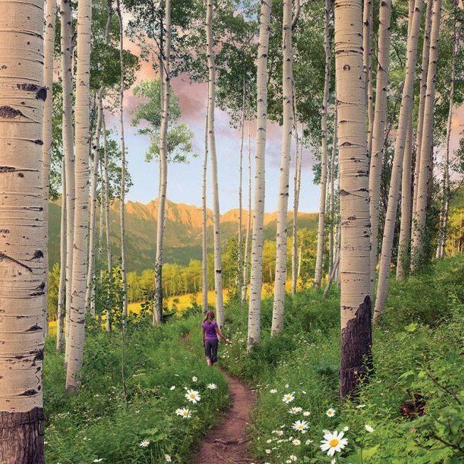 Berry picker trail vail coloradoaffleck cdhb1m aw4e4x