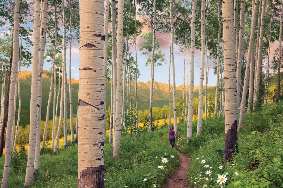 Berry picker trail vail coloradoaffleck cdhb1m