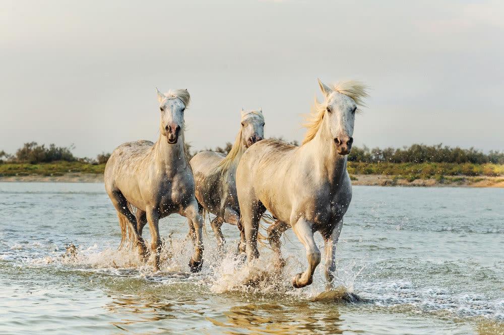 Wild horses cumberland island g9mmun