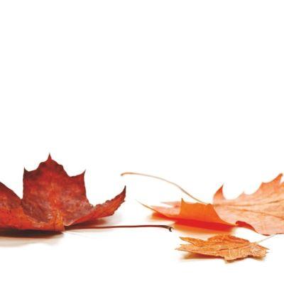 1014 1014 fall leaves shutterstock 80682181 cdutub