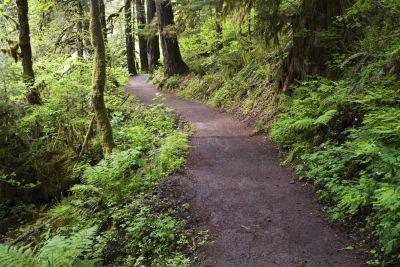 Forest park christopher boswell oannak