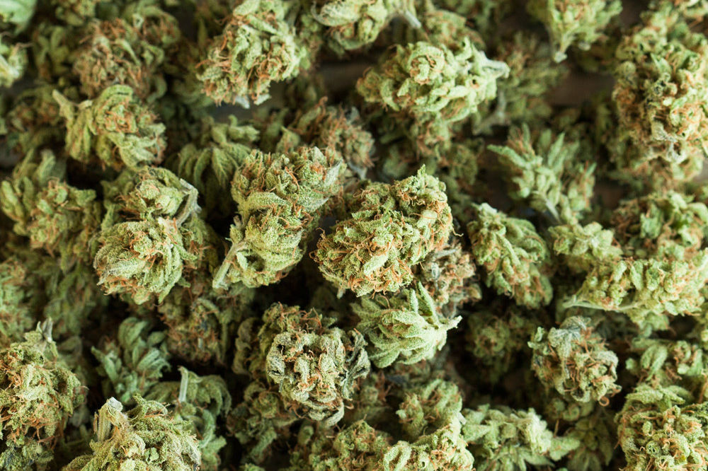 Шишка конопля сколько времени держится в марихуана