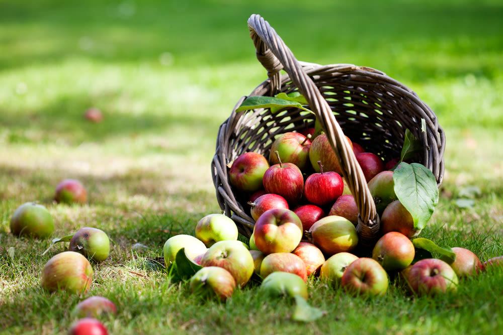 8 6 13 apples yakima kati molin iiupjg