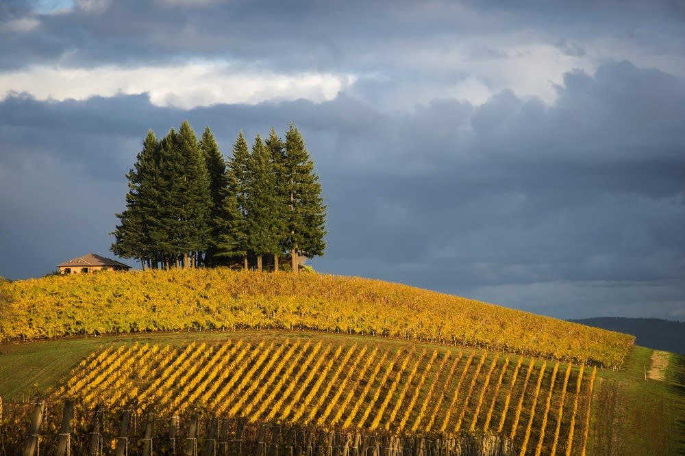 Willamette valley vineyard leaves fall robert crum ulnnad