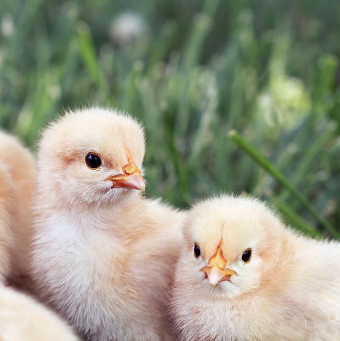 Shutterstock 119232175 ib0zq7