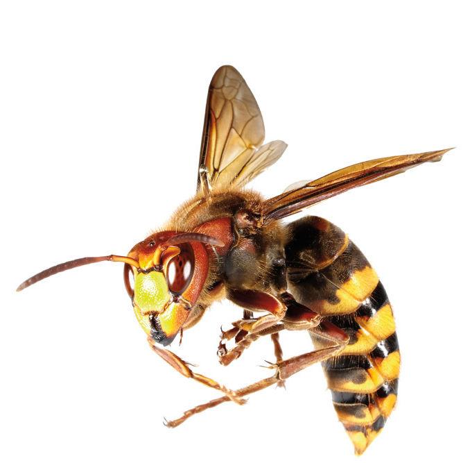 0613 bee uuvbvt