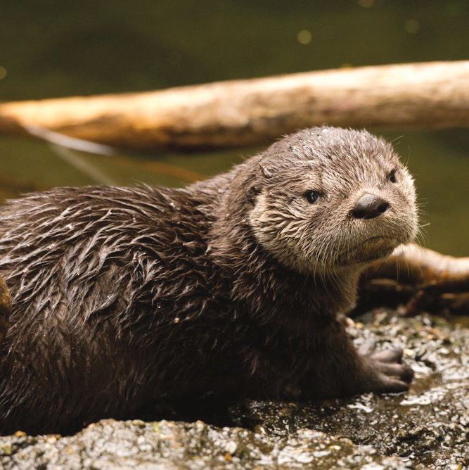 0618 dispatch rateaspecies otter uwcevn