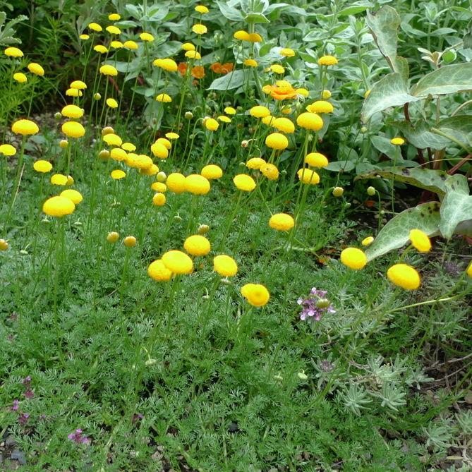 Yellow buttons  eghwpn