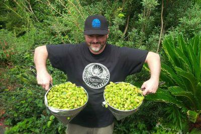 Mcmenamins fresh hop thundercone simcoe 2 lnmoe7