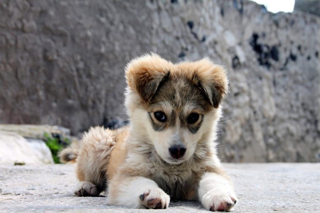Puppy wojkah
