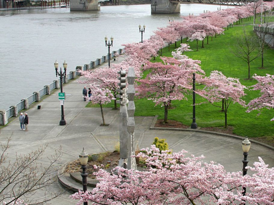 Waterfront park  portland dbsqcd