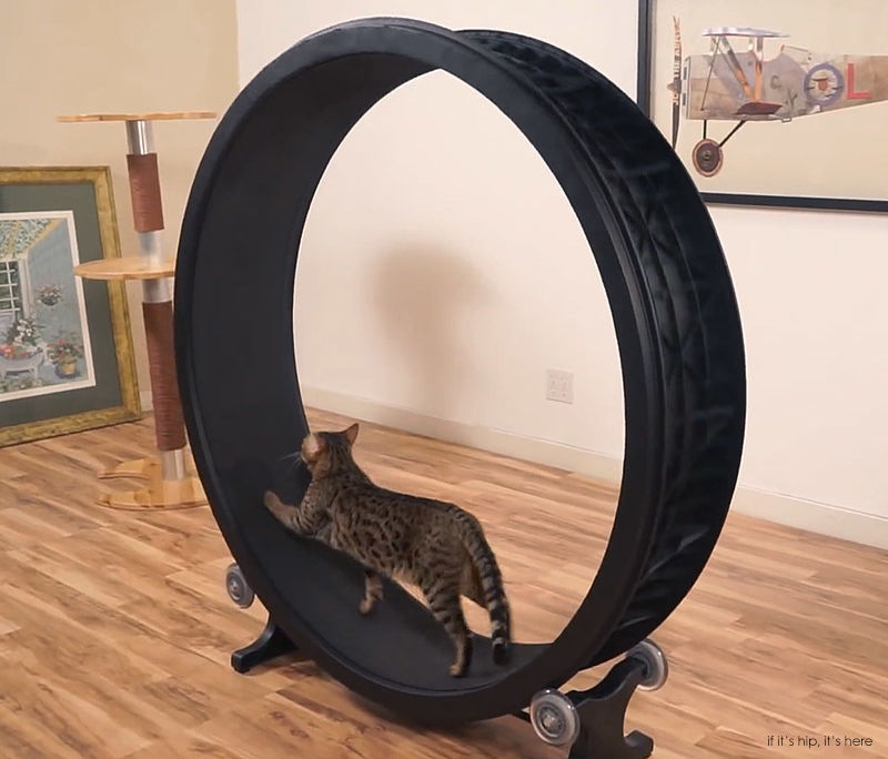 Cat exercise wheel 2 iihih ziyvnj