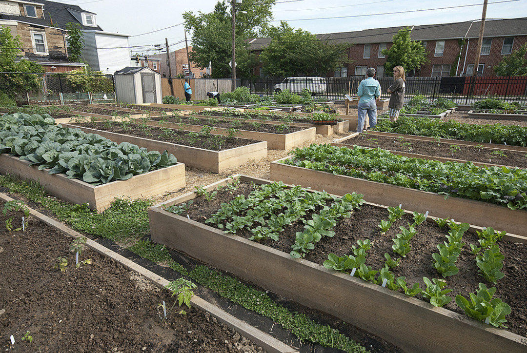 Planted Houston Has Big Plans For Urban Farming Houstonia Magazine