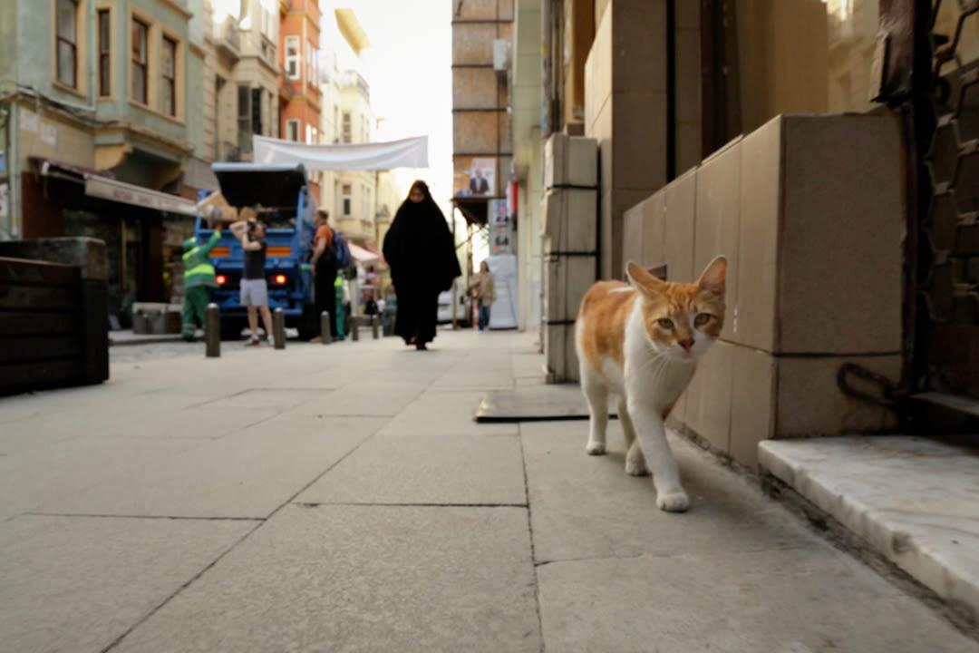 Kedi cswpu3