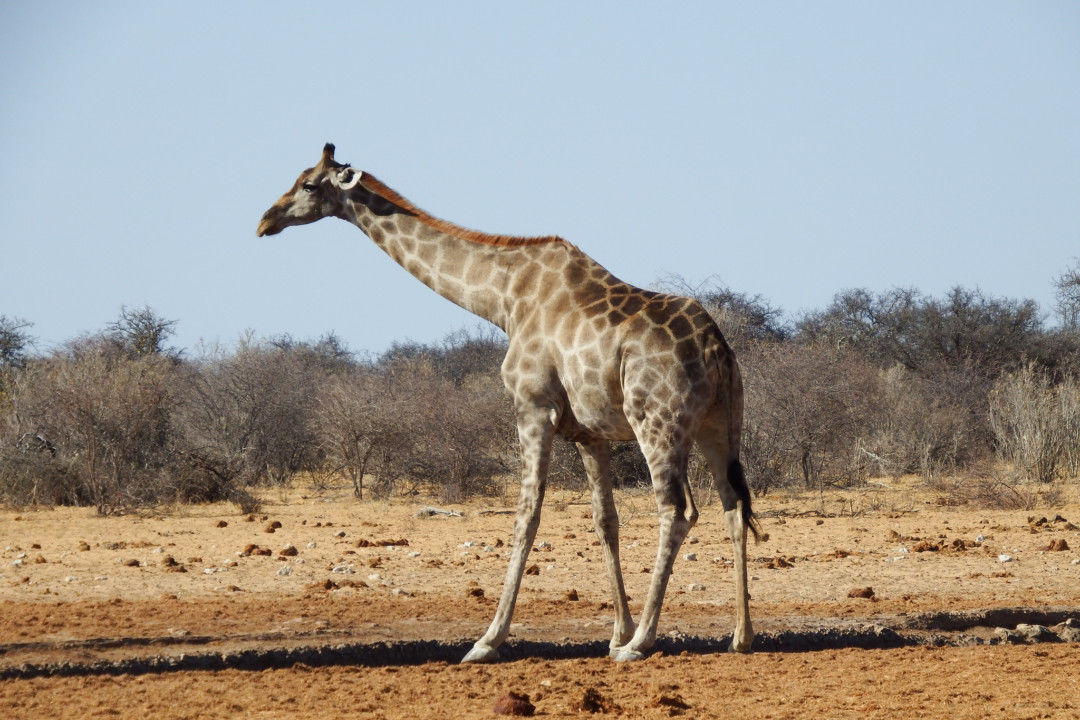 DIY Safari: How to Visit Africa on a Budget