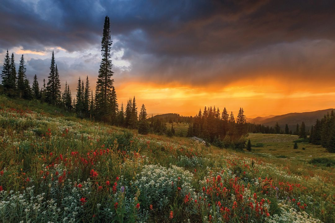Wildflowerhikes qscv3b