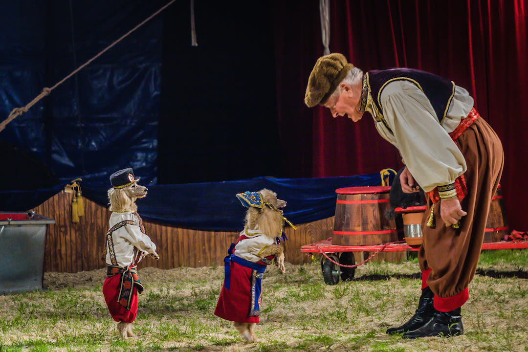 Zoppe italian family circus kvctph