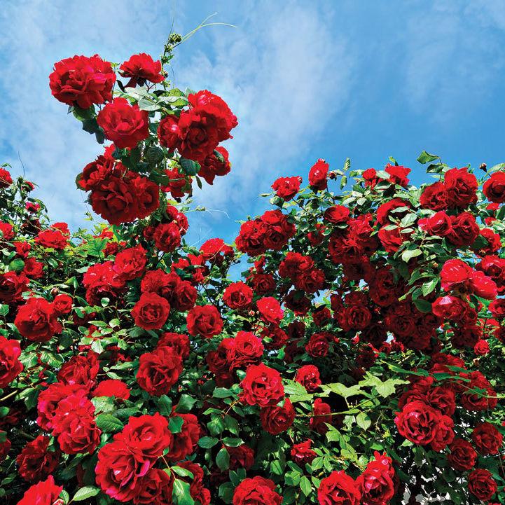 0215 gardening microclimates szw2ga