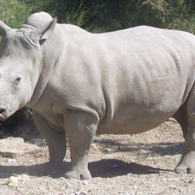 Rhino yhh3mv