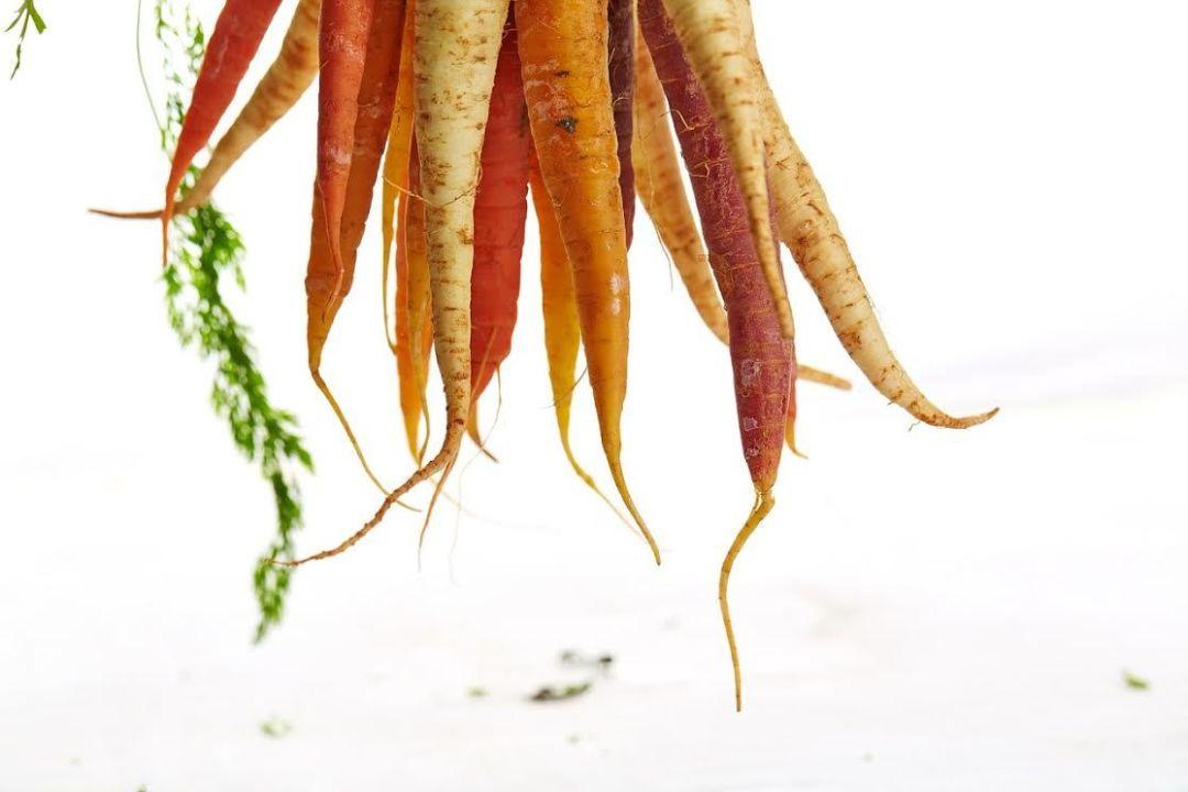 Carrots w64o1d