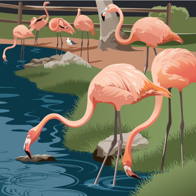 Flamingo gauuoh
