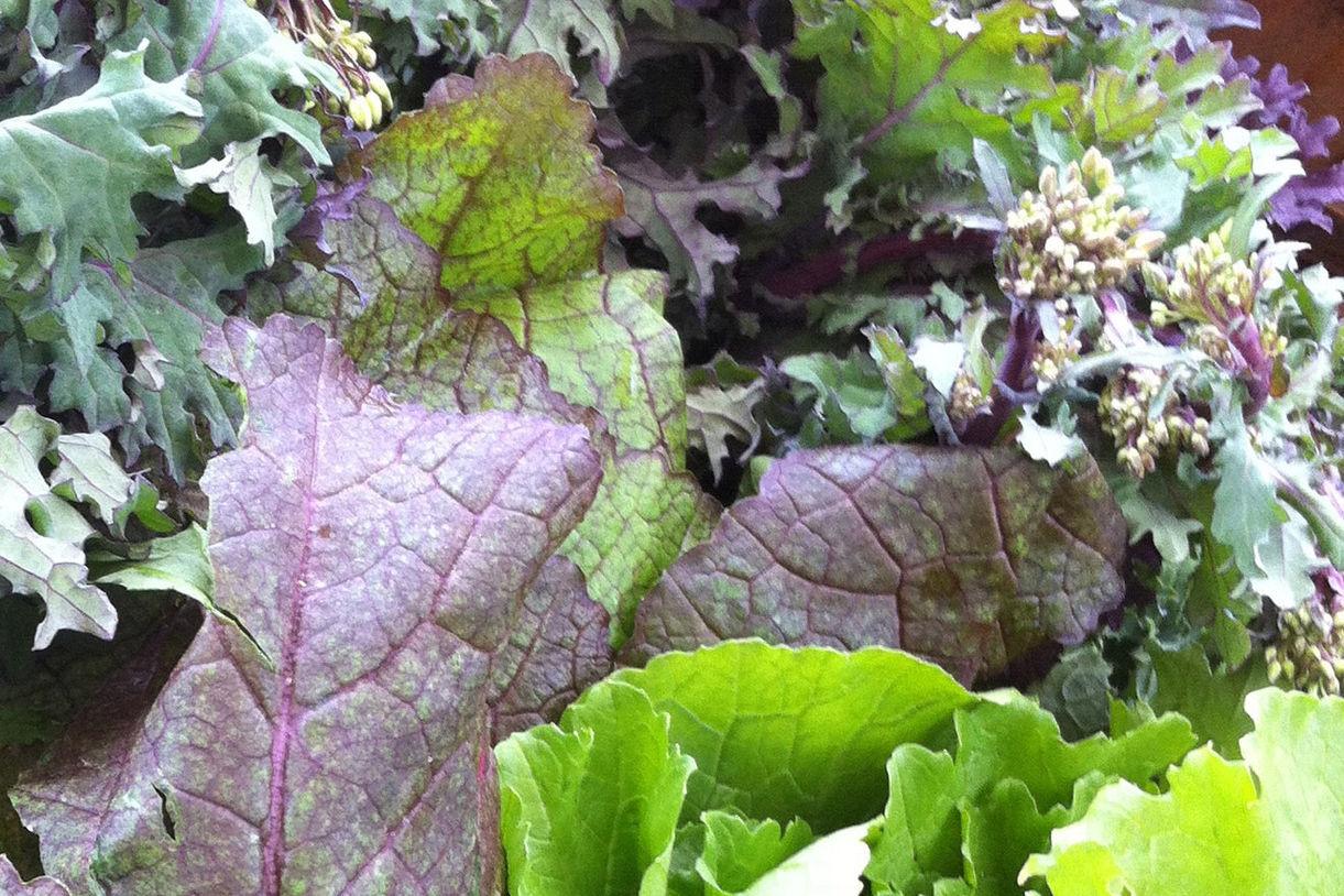 4.13 greens variety tflsrb